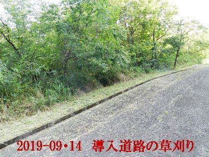2019-09・14 我が家のスナップ・・・ (3).JPG