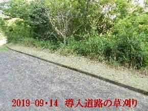 2019-09・14 我が家のスナップ・・・ (4).JPG