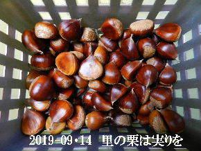 2019-09・14 里山も秋の実りが (2).JPG
