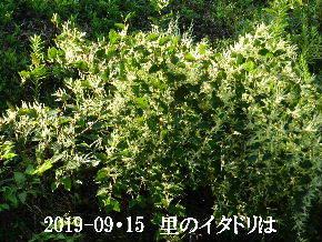 2019-09・15 今日の出遭い・・・ (1).JPG