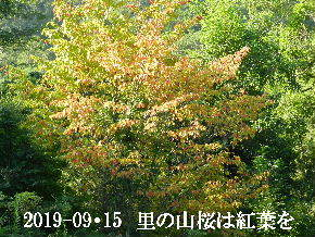 2019-09・15 今日の出遭い・・・ (2).JPG