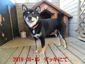2019-09・15 今日の麻呂 (2).JPG