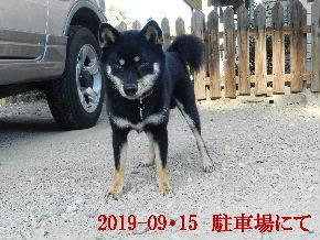 2019-09・15 今日の麻呂 (4).JPG