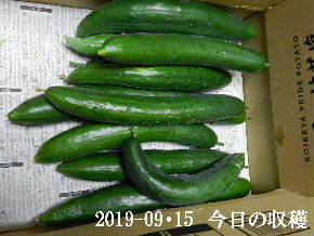 2019-09・15 我が家のスナップ・・・ (3).JPG