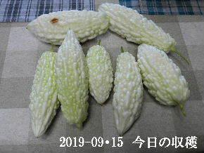 2019-09・15 我が家のスナップ・・・ (4).JPG