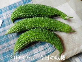 2019-09・15 我が家のスナップ・・・ (5).JPG