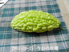 2019-09・15 我が家のスナップ・・・ (6).JPG