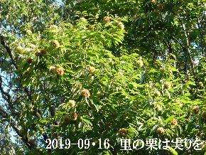 2019-09・16 今日の出遭い・・・ (1).JPG