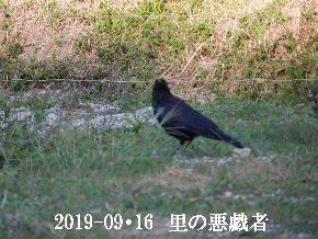 2019-09・16 今日の出遭い・・・ (10).JPG