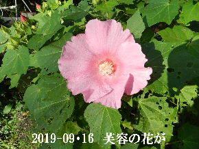2019-09・16 今日の出遭い・・・ (3).JPG
