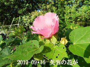 2019-09・16 今日の出遭い・・・ (4).JPG