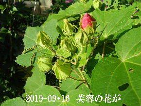 2019-09・16 今日の出遭い・・・ (6).JPG