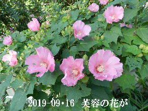 2019-09・16 今日の出遭い・・・ (7).JPG