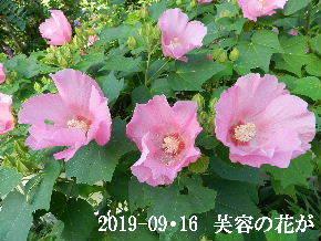 2019-09・16 今日の出遭い・・・ (8).JPG