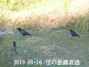 2019-09・16 今日の出遭い・・・ (9).JPG