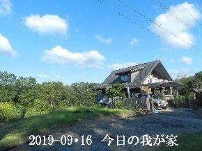 2019-09・16 今日の里山模様・・・ (1).JPG