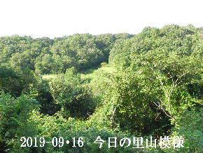 2019-09・16 今日の里山模様・・・ (3).JPG