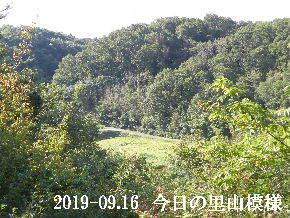 2019-09・16 今日の里山模様・・・ (4).JPG