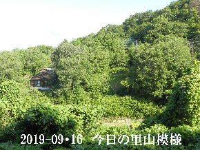 2019-09・16 今日の里山模様・・・ (5).JPG