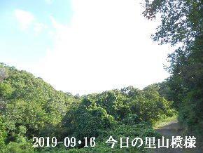 2019-09・16 今日の里山模様・・・ (6).JPG