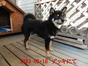 2019-09・16 今日の麻呂 (2).JPG