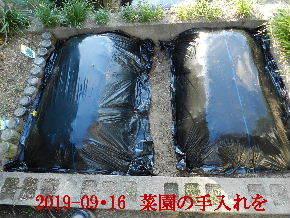 2019-09・16 我が家のスナップ・・・ (1).JPG