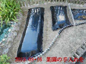 2019-09・16 我が家のスナップ・・・ (2).JPG