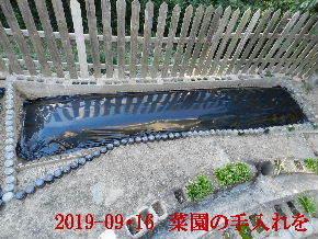 2019-09・16 我が家のスナップ・・・ (3).JPG