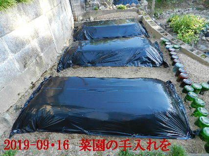 2019-09・16 我が家のスナップ・・・ (4).JPG