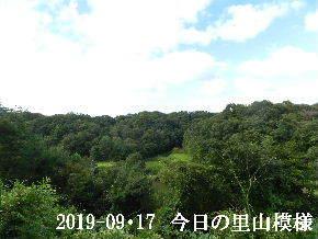 2019-09・17 今日の里山模様・・・ (3).JPG