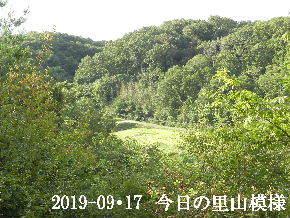 2019-09・17 今日の里山模様・・・ (4).JPG