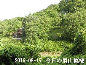 2019-09・17 今日の里山模様・・・ (5).JPG
