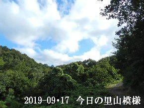 2019-09・17 今日の里山模様・・・ (6).JPG