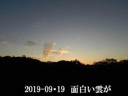 2019-09・19 里の夕暮れ時・・・ (2).JPG