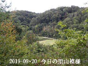2019-09・20 今日の里山模様・・・ (4).JPG