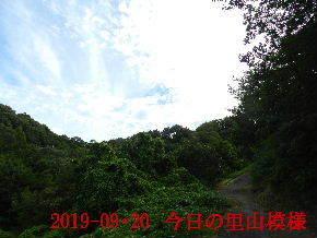 2019-09・20 今日の里山模様・・・ (6).JPG