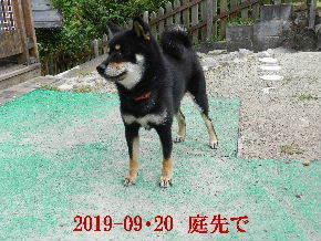 2019-09・20 今日の麻呂 (2).JPG