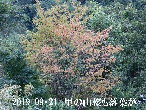 2019-09・21 今日の出遭い・・・ (1).JPG