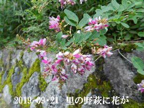 2019-09・21 今日の出遭い・・・ (10).JPG