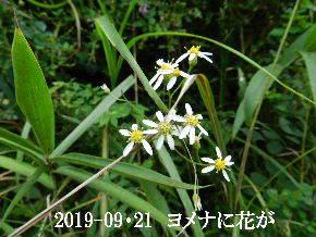 2019-09・21 今日の出遭い・・・ (11).JPG
