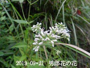 2019-09・21 今日の出遭い・・・ (12).JPG