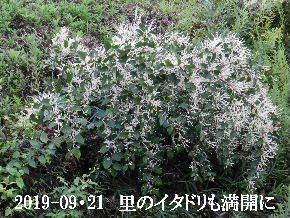 2019-09・21 今日の出遭い・・・ (2).JPG