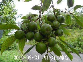 2019-09・21 今日の出遭い・・・ (3).JPG