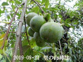 2019-09・21 今日の出遭い・・・ (4).JPG