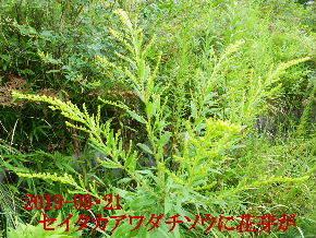 2019-09・21 今日の出遭い・・・ (5).JPG