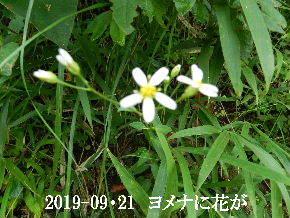 2019-09・21 今日の出遭い・・・ (6).JPG