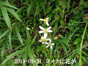 2019-09・21 今日の出遭い・・・ (7).JPG