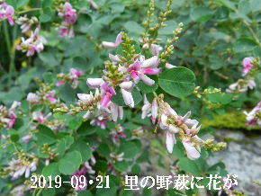 2019-09・21 今日の出遭い・・・ (8).JPG