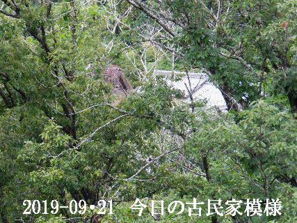 2019-09・21 今日の古民家模様.JPG