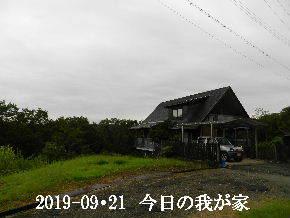 2019-09・21 今日の里山模様・・・ (1).JPG